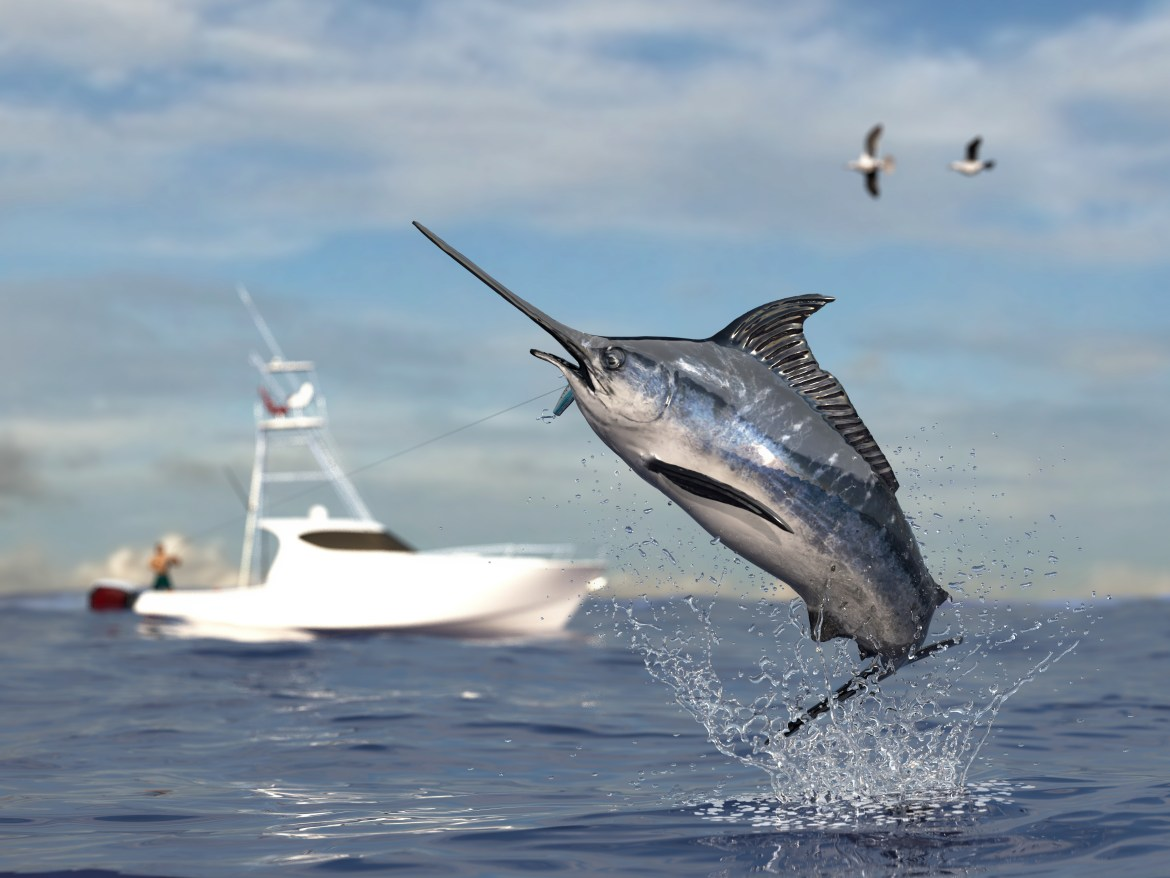 Professional fisher catching a marlin in the ocean