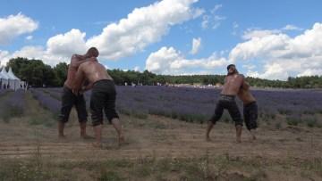 Kırklarelili güreşçiler, Kırkpınar hazırlıklarını lavanta tarlasında sürdürüyor