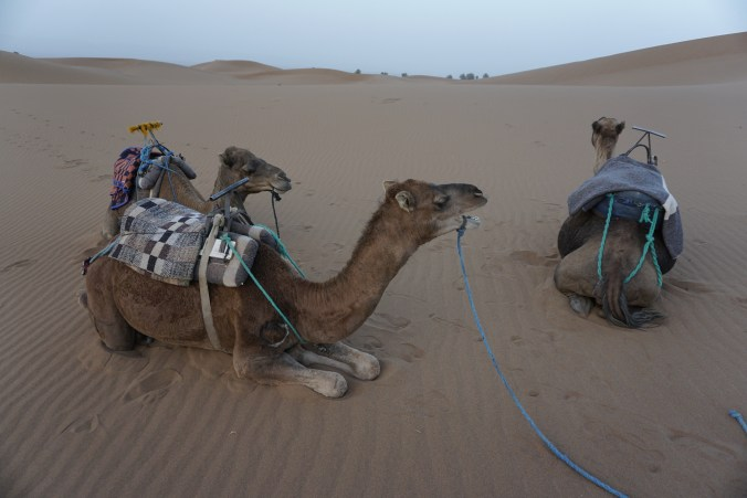 Non-Mechanical Camels