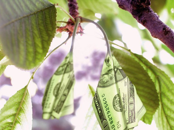 New $20 bills - Proof that money does grow on trees. by Kirk Tanner