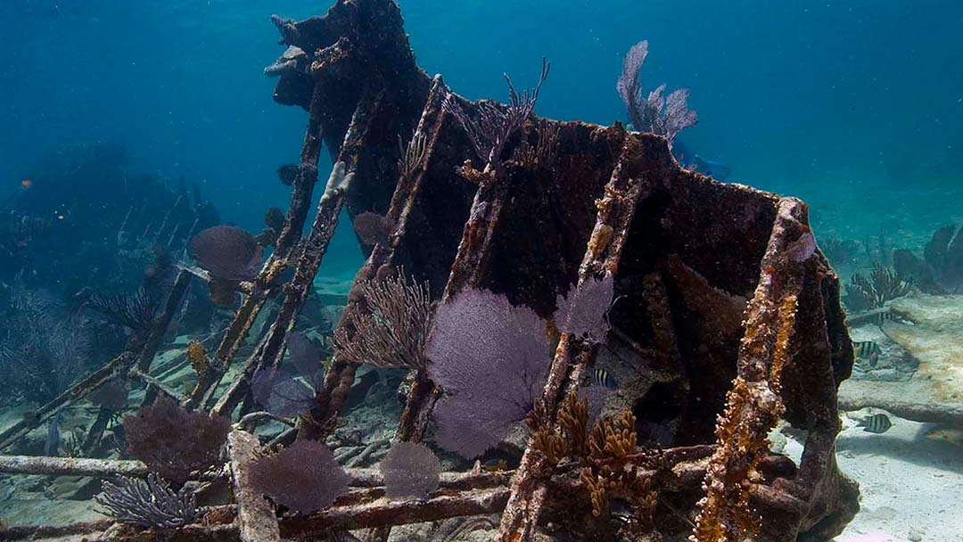 Hargitt Marine Services Sunken Treasure Ship Recovery Shark Tank