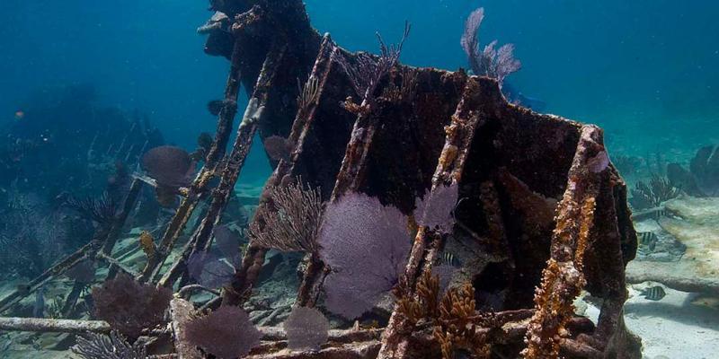 Hargitt Marine Services - Shark Tank