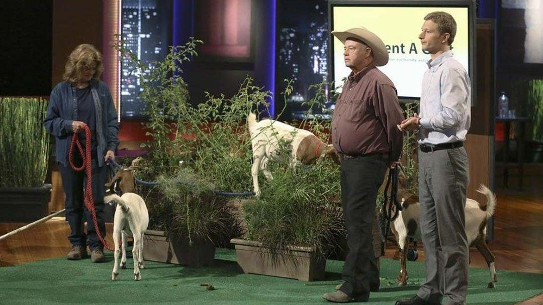 Rent A Goat Super Cute Weed Removal Shark Tank Pitch