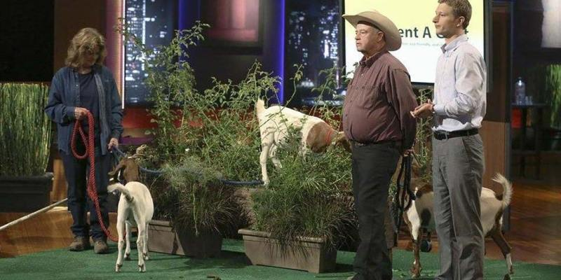 Rent a Goat - Shark Tank