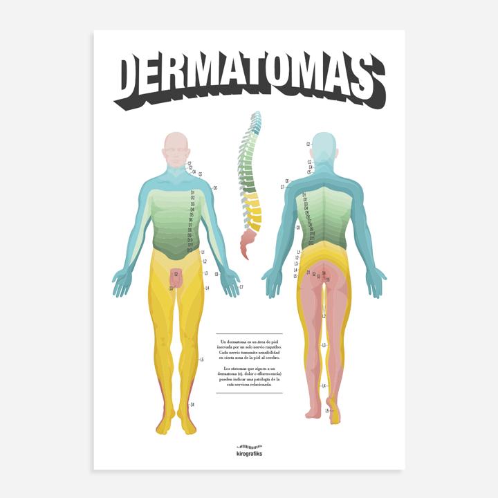 Los dermatomas del cuerpo humano - Kirografiks
