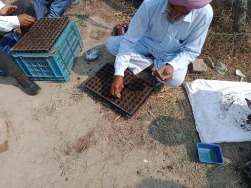 Preparation of the seedlings