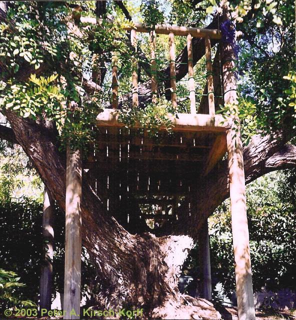 Free Standing Rustic Wood Tree House  Los Angeles