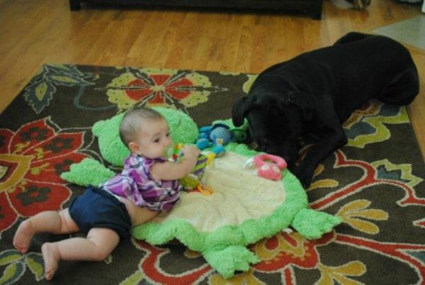 Cooper with italian mastiff.