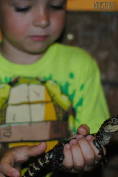 Holding a baby alligator at Gator Country.