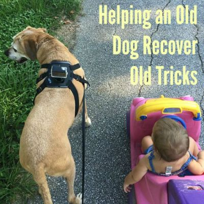 Helping an Old Dog Recover Old Tricks
