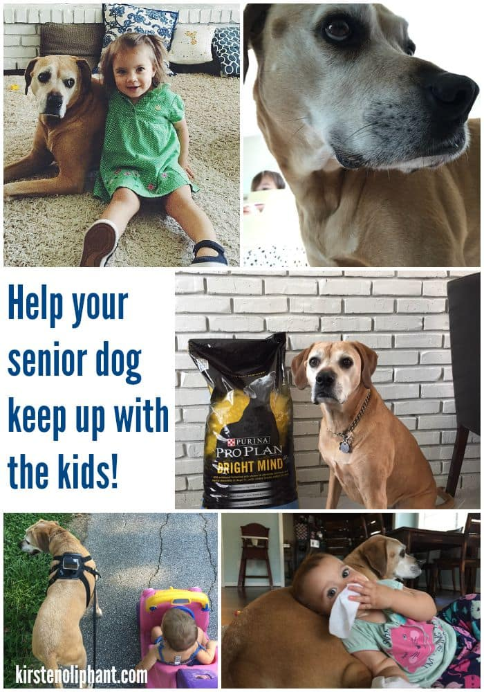 Help your old dog recover his old tricks (and keep up with the kids!) with ProPlan #BrightMind! #ad