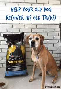 ProPlan #BrightMind is formulated for your senior pups to help get that spring back in their steps! #ad
