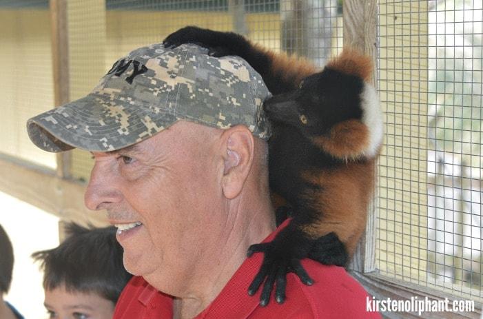 gulf coast zoo lemurs