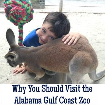 Why You Should Visit the Gulf Coast Zoo