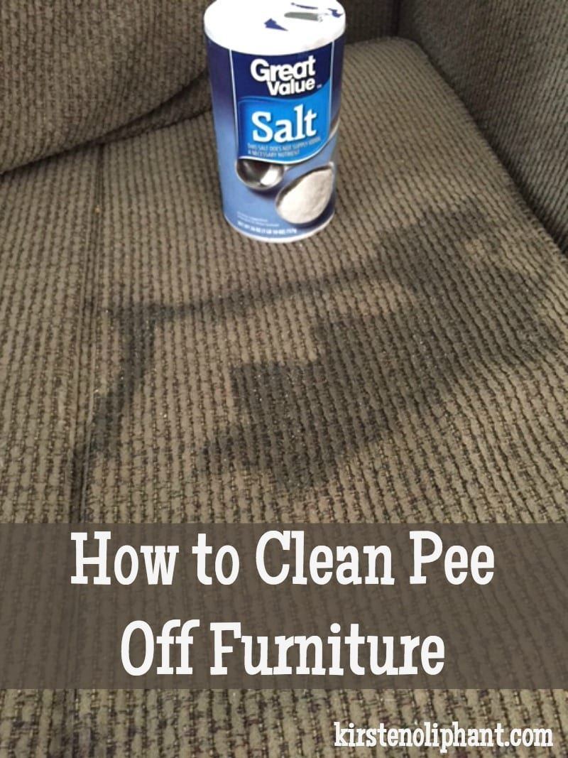 Clean Dog Pee On Wood Floor Home Owner Cleaning Up Dog Pee On Carpet Floor How To Get The Cat