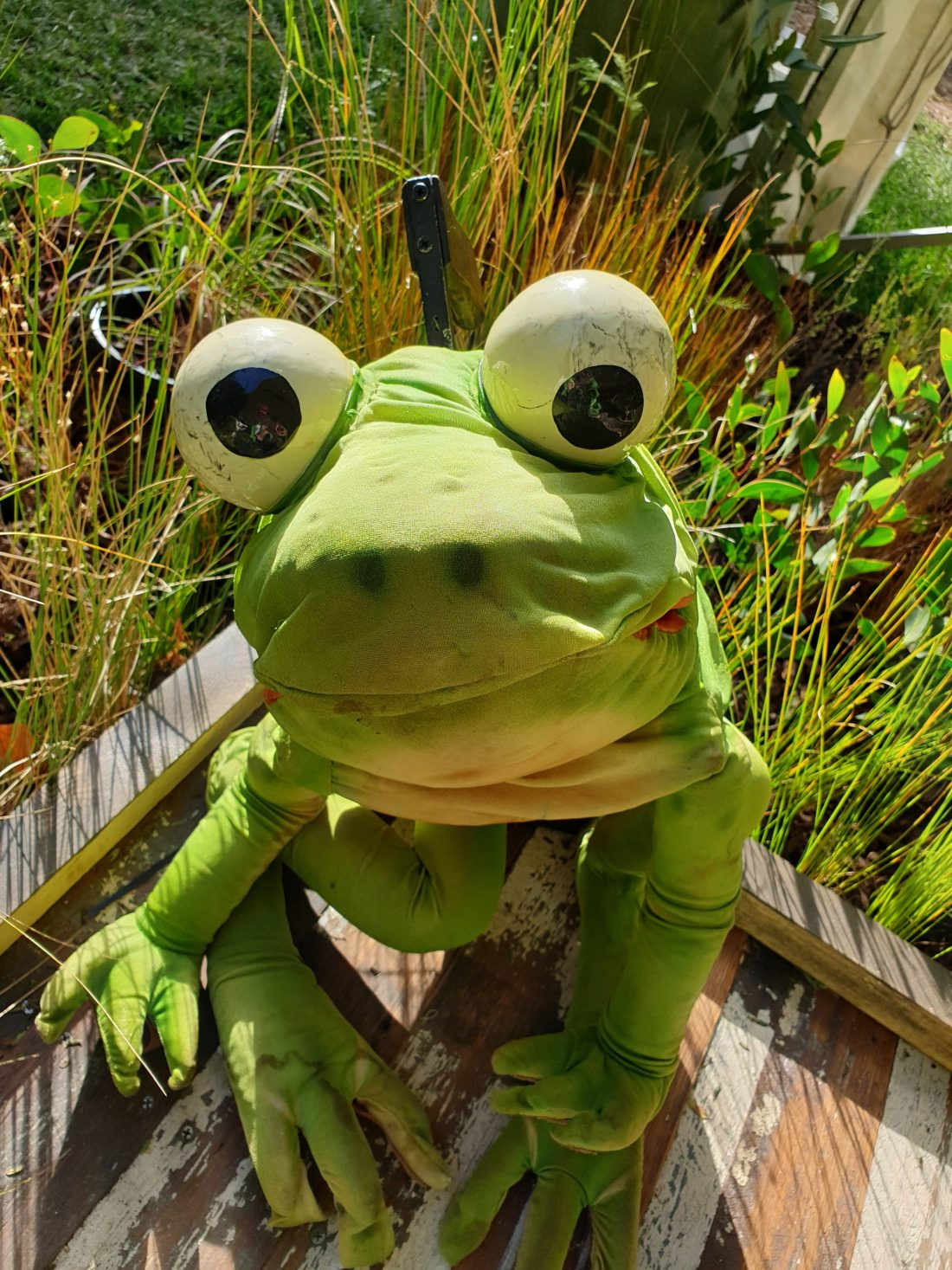 A large green frog puppet, with plants in the background