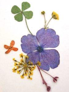 キンモクセイの押し花