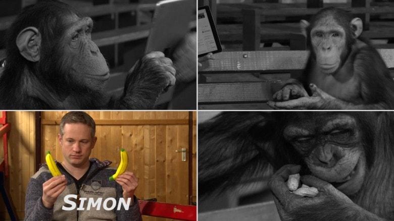 ipad-maymun-kisiyorumlari