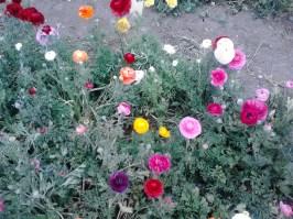 IMG_20130323_111836