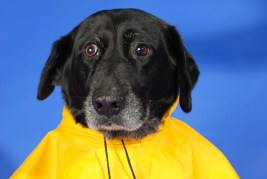 Dog Raincoat Kiss Dog Training