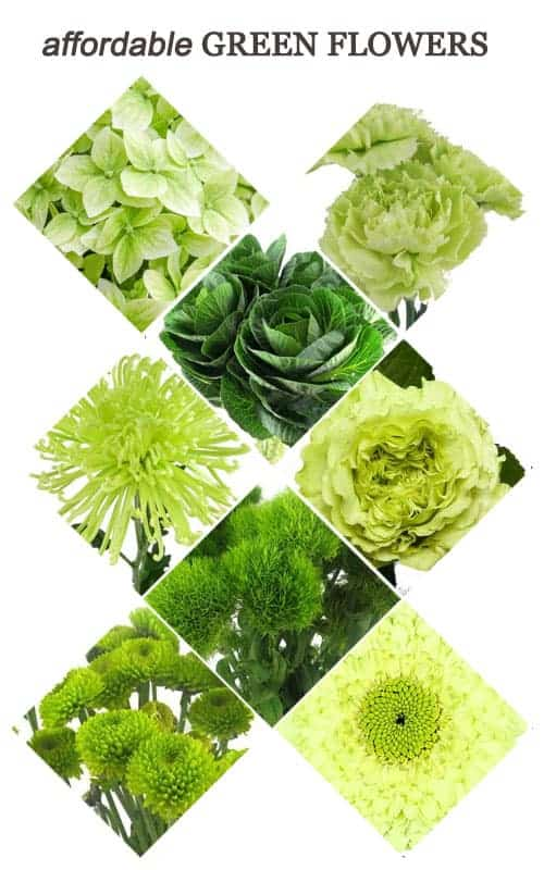 Affordable Green Flowers for Your Wedding