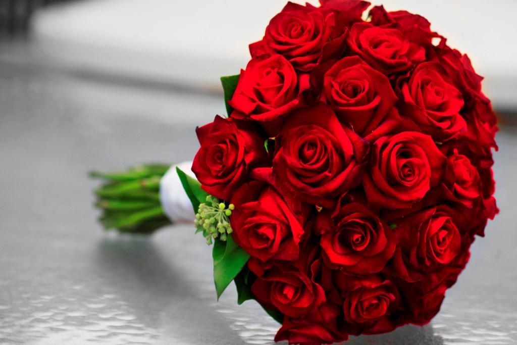 صور ورد احمر طبيعي اجمل ورد احمر رومانسي مجلة رجيم