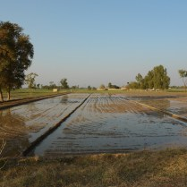 Rural Punjab, Wikimedia Commons