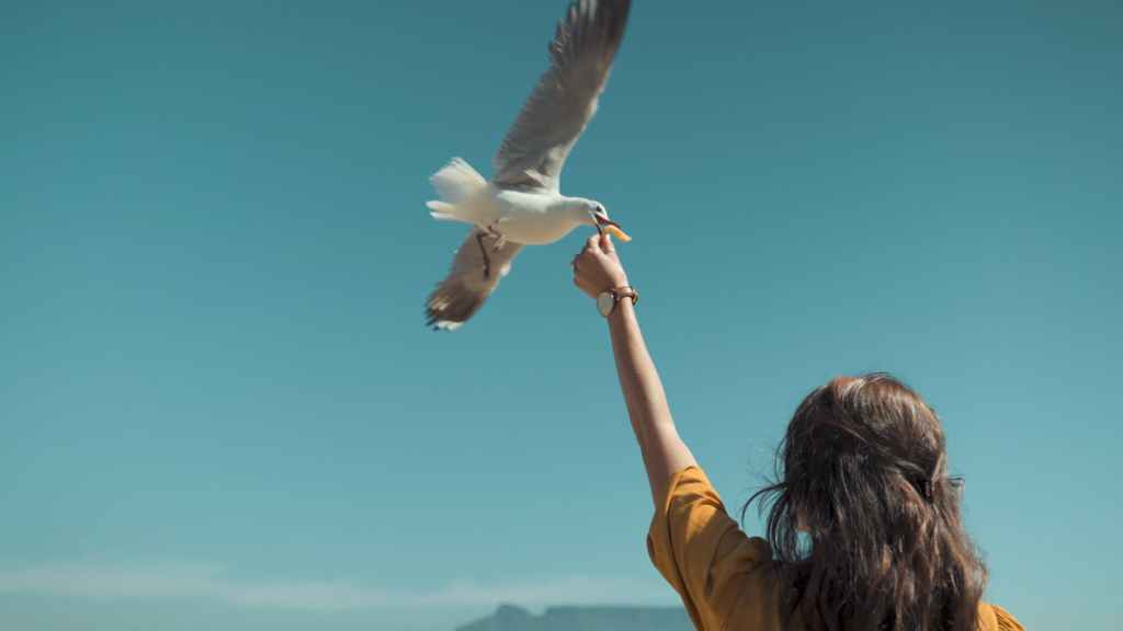 woman in brown long sleeve shirt with white bird flying