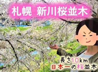 札幌 新川桜並木