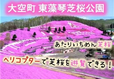大空町 東藻琴芝桜公園
