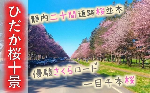【ひだか桜十景】桜の名所がわかる!静内,登別,浦河の開花情報は?桜祭り&見頃は?アクセス情報満載