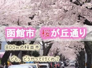 函館市 桜が丘通