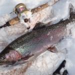 釣り方の参考に!厳寒期のニジマス・アメマスの生態水中動画!