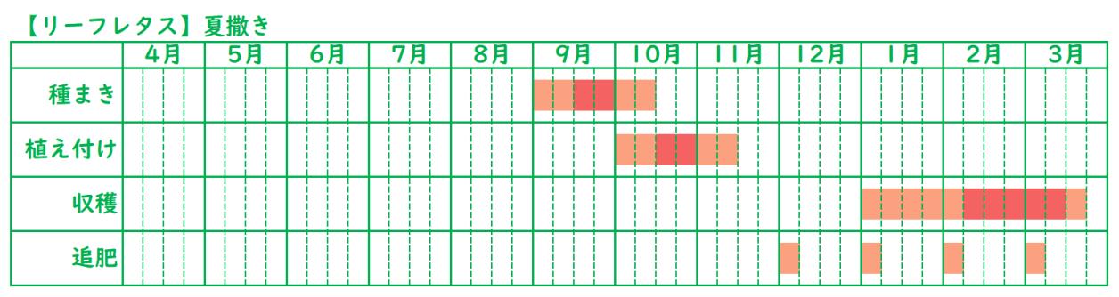 リーフレタスの栽培スケジュール_秋植え