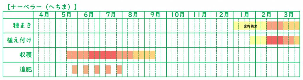 ナーベラーの栽培スケジュール