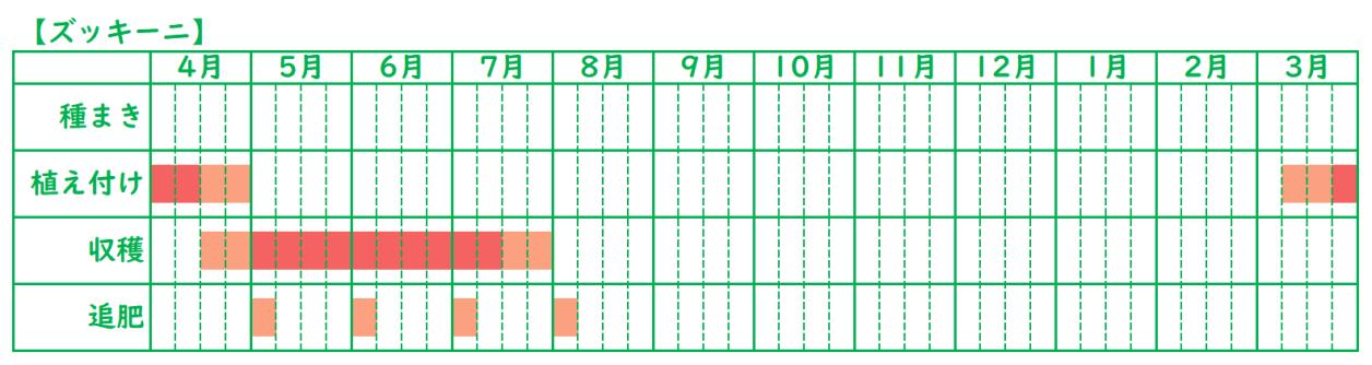ズッキーニの栽培スケジュール