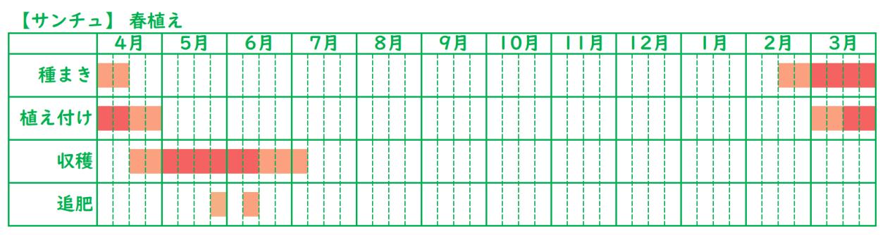 サンチュの栽培スケジュール_春植え