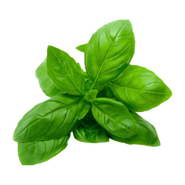 Basil Woolly Farms