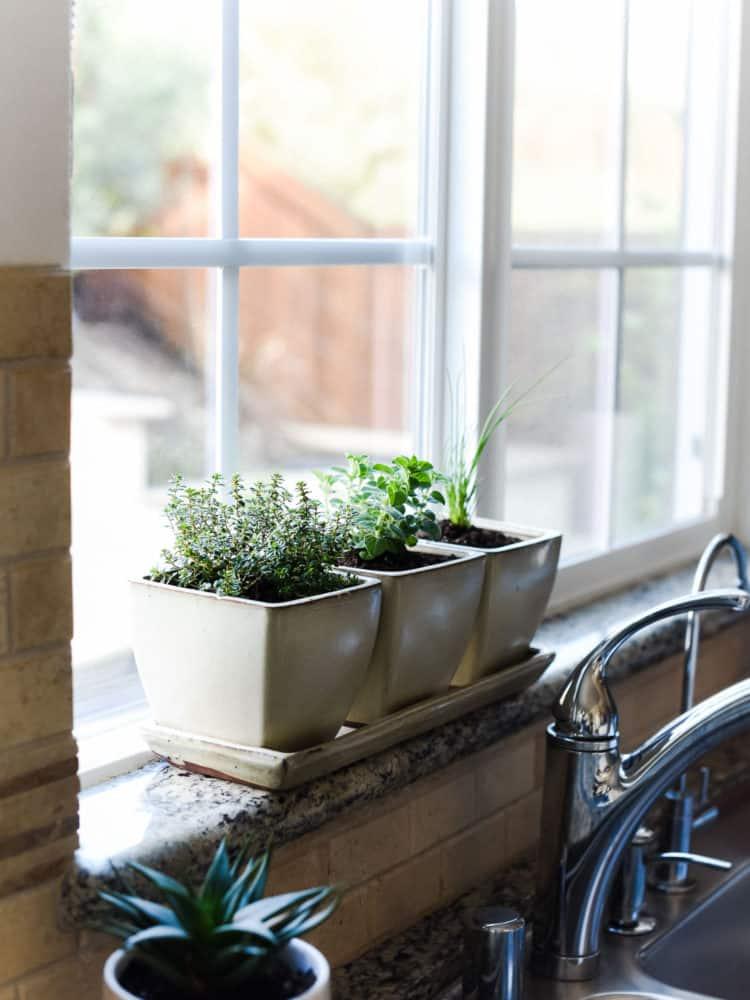 How to Start an Indoor Herb Garden  Kitchen Confidante