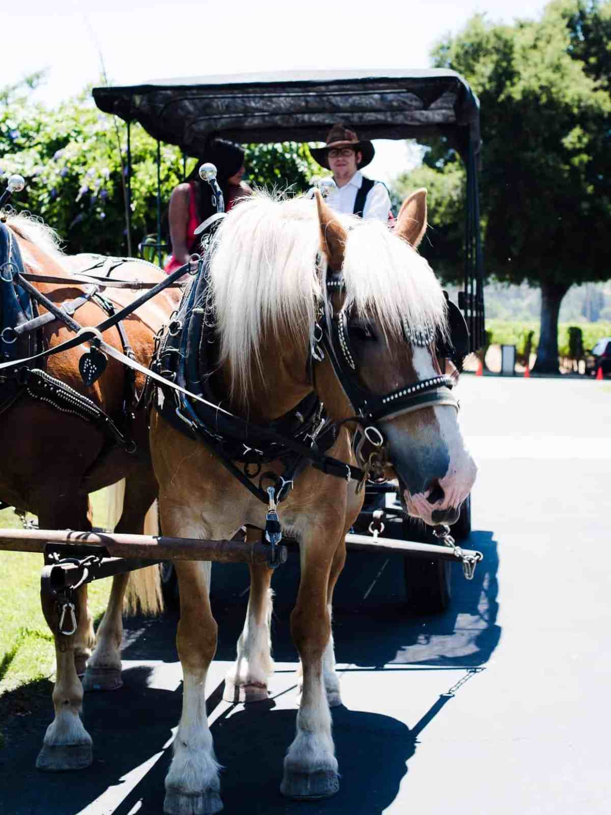 Two tan horses pulling a carriage at a winery.