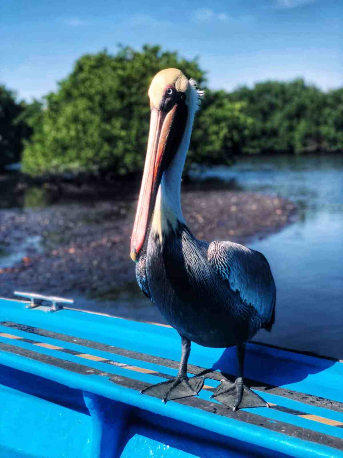 #ad Abundant birdlife in the mangroves of Mazatlan is one of many excursions in Mexico with Princess Cruises.