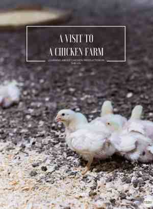 Have you ever wondered what it's like at a chicken farm and chicken production in the U.S.? Join me as I share my recent visit to a chicken farm in Maryland for a Chicken Check In and how farmers and the National Chicken Council are working hard to provide safe, healthy, and sustainable food. #ad #chickencheckin