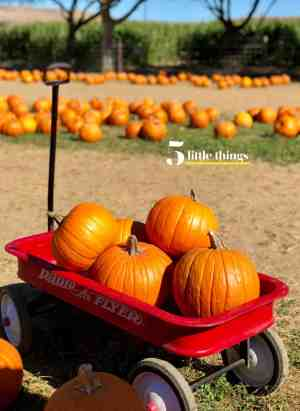 Pumpkins stacked in a Radio Flyer wagon at the pumpkin patch.