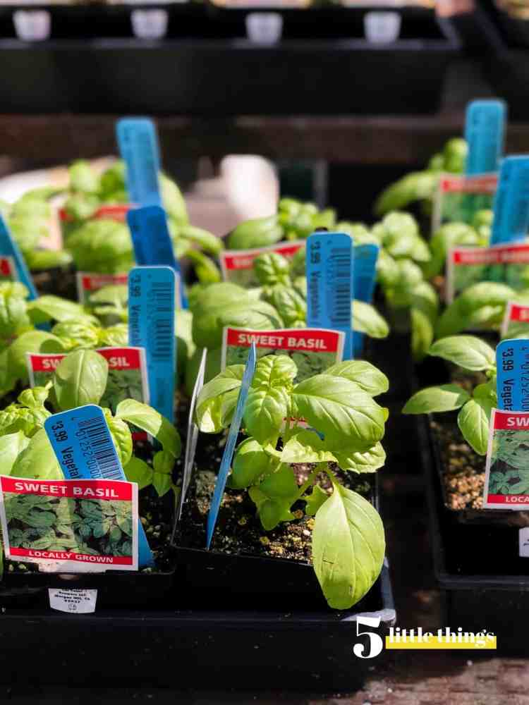 Basil plants are one of the Five Little Things I loved the week of March 22, 2019.