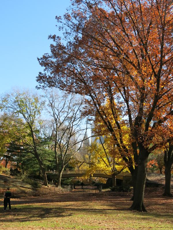Central Park-2433