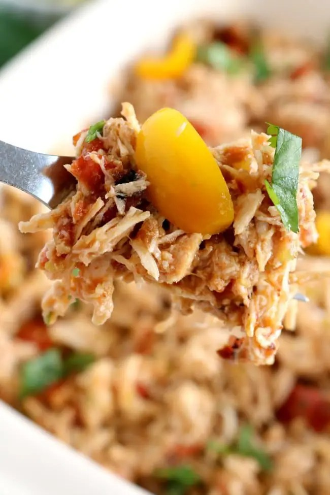 A close up image of shredded chicken tinga on a fork.