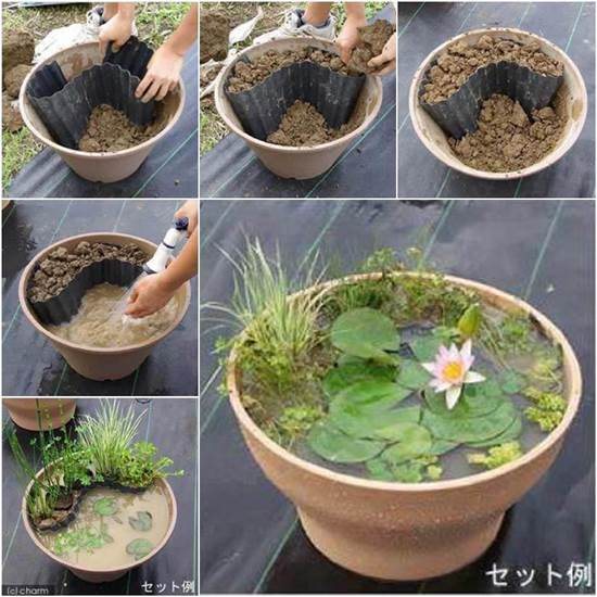 DIY Water Garden in a Pot!