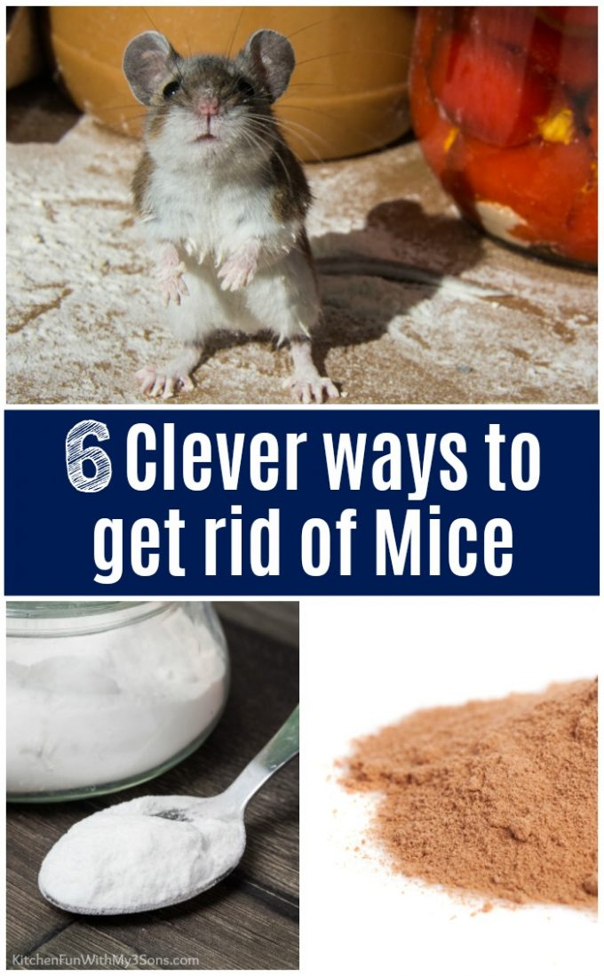 Clever ways to get rid of mice!