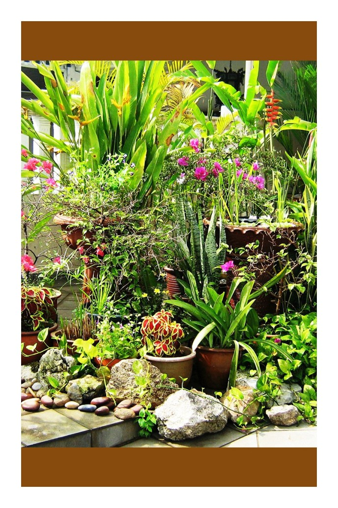 simple tropical garden ideas cold hardy