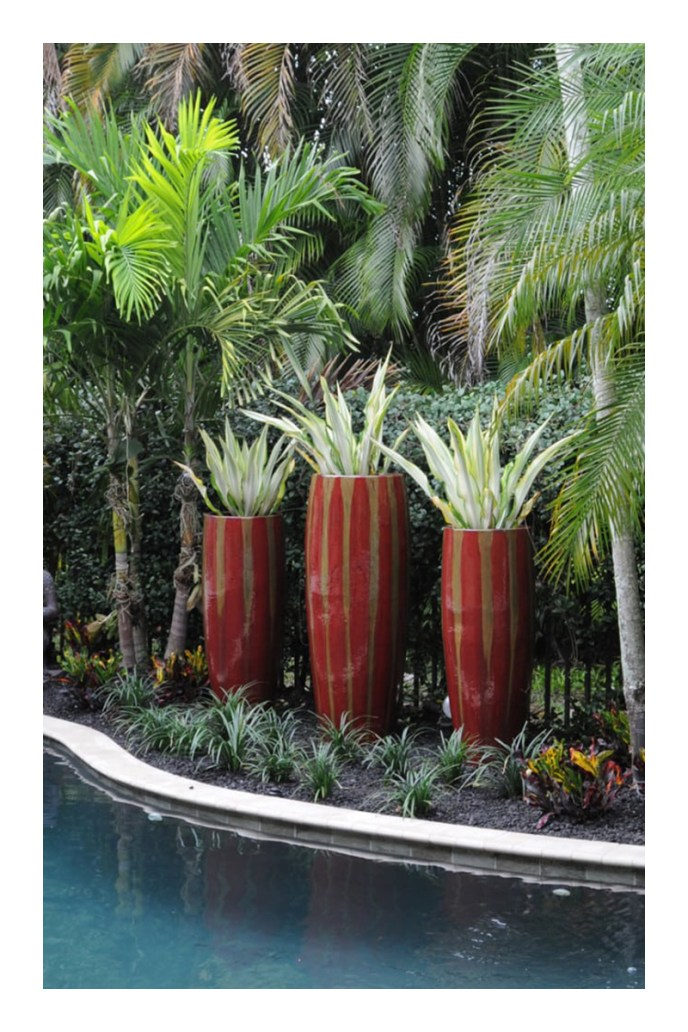 small tropical garden design ideas
